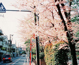 japan, flowers, and sakura image