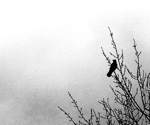 bird, black, and white image