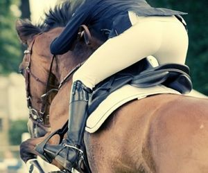 beautiful, horse, and show jumping image