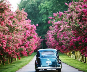 flowers, pretty, and road image