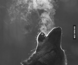 black and white, Howl, and nature image