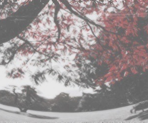 header, red, and flowers image