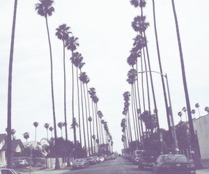 california, palm trees, and wallpaper image