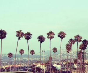 hollywood, natural beauty, and trees image