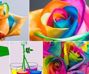 diy, idea, and flower image