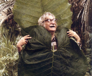burle marx and tropical image