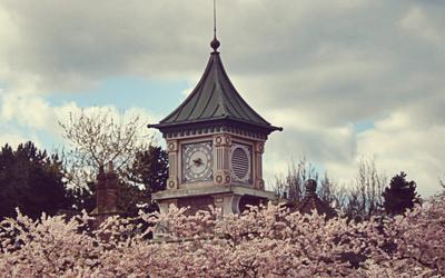 blooming, cherry blossom, and disneyland image