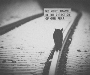 black and white, cat, and fear image