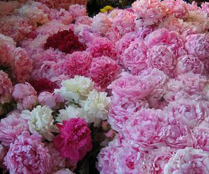 peonies and pikes market place image