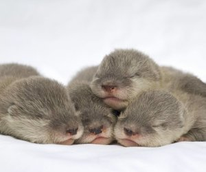 adorable, baby, and otters image