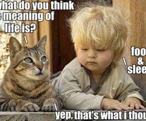 cat, life, and funny image