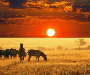 africa, animals, and nature image