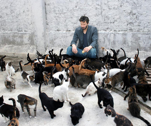 cat and keanu reeves image