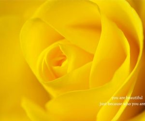 yellow, rose, and beautiful image