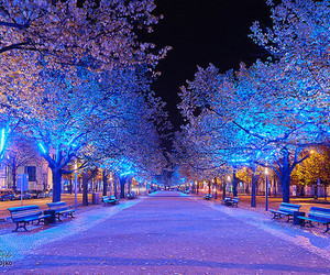light, tree, and blue image