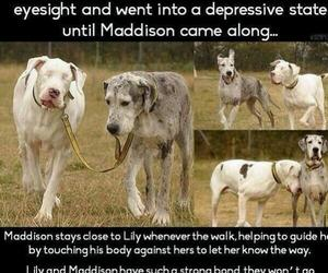 dog, blind, and friends image