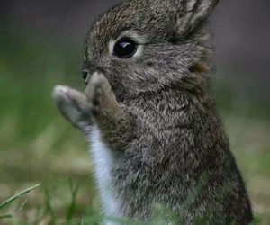 awww, heart, and bunny image