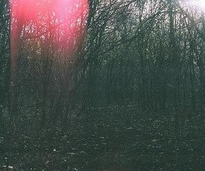 tree, indie, and vintage image