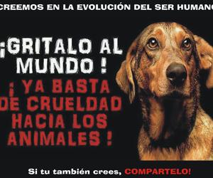 animal, Animales, and no image