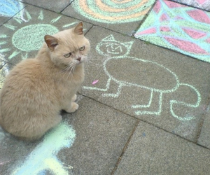 animal, paint, and cat image