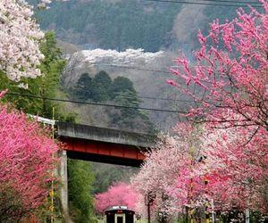 japan, train, and nature image