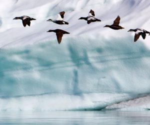 birds, ice, and nature image