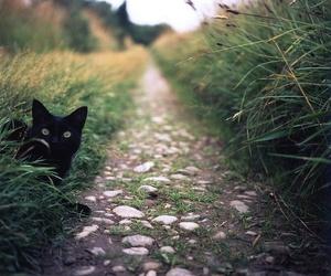 cat, black cat, and nature image