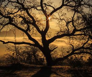 tree and sun image