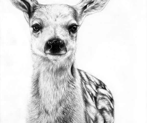 deer, cute, and animal image