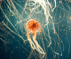 jellyfish, animal, and photography image
