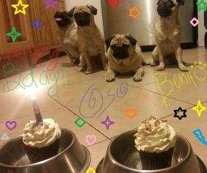bday, pugs, and happy birthday image