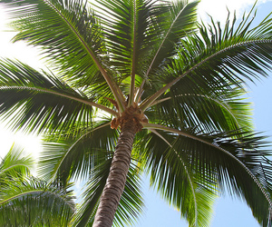 summer, palm trees, and palms image