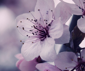 Dream, flower, and nature image
