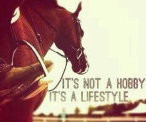 horse, lifestyle, and hobby image
