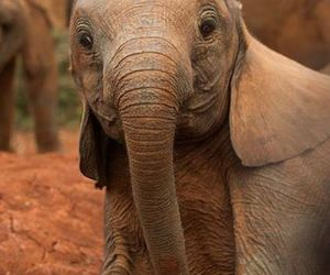 elephant, baby, and animal image