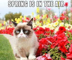 funny, spring, and grumpy cat image
