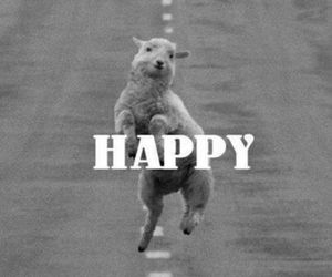 happy, sheep, and funny image
