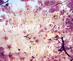 flowers, welcome, and pink image