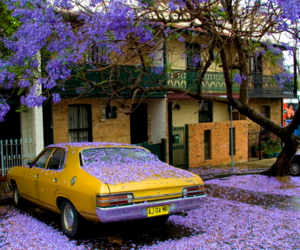 car, purple, and flowers image