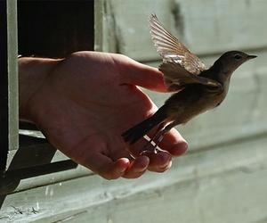 bird, animal, and free image