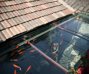 fish and roof image