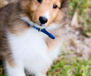 cute, dog, and animals image