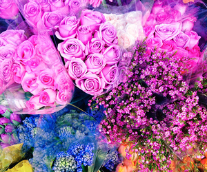 beautiful, colourful, and flowers image