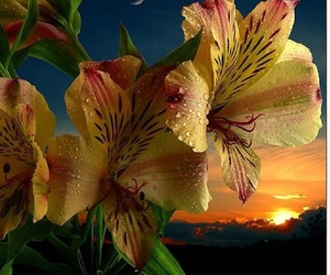 flowers, moon, and sunset image