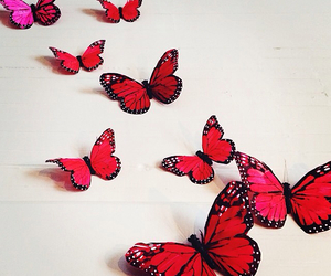 beautiful, butterflies, and inspiration image