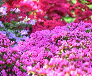 azaleas, botanical garden, and bud image