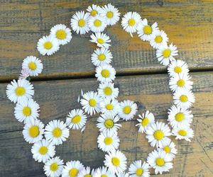 daisy and peace image