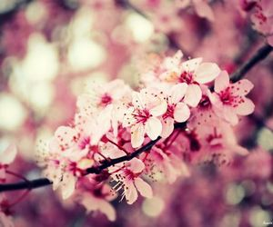 awesome, flower, and warm image
