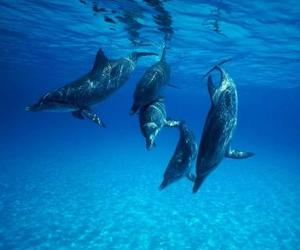 dolphin, blue, and animal image