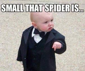 spider, funny, and boy image